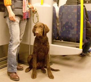 Metro[1].jpg