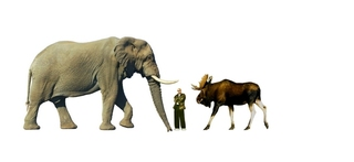 largestelephant400vs220cmherajika[1].jpg